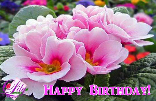 May This Birthday Be Filled With Free Flowers ECards Greeting Cards 123 Greetings