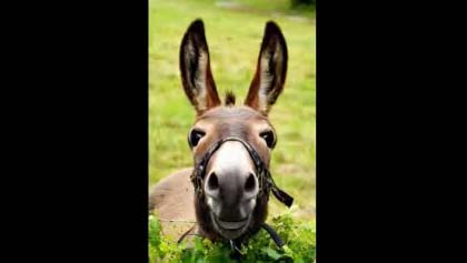 Donkey Birthday Greeting For Friend Free For Best Friends ECards 123 Greetings