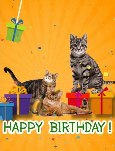 Happy Birthday With Cats Free For Kids Ecards Greeting