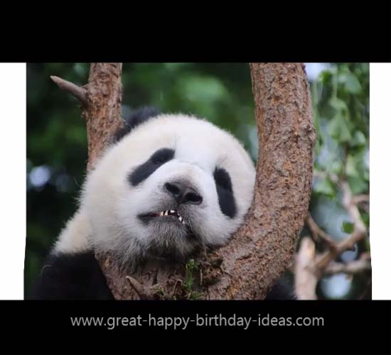 Happy Birthday Panda Style Free Specials ECards Greeting Cards 123 Greetings