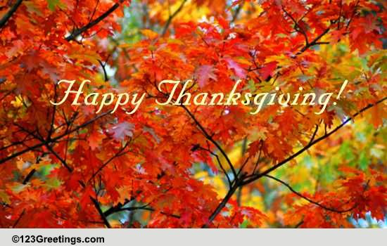 Joy And Beauty Of The Season Free Happy Thanksgiving ECards 123 Greetings