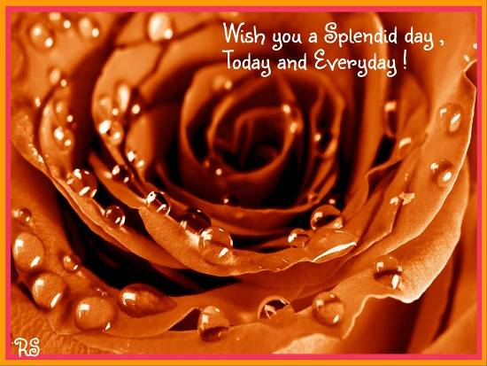 Wish You A Splendid Day Free Have A Great Day ECards Greeting Cards 123 Greetings