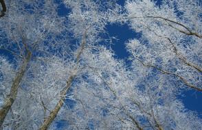 Обои природа, деревья, дерево, ветки, снег скачать обои ...