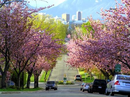 Vancouver cerezos