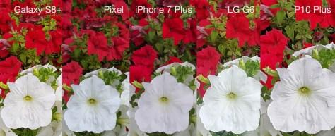 Flor 2 Detalle Recorte 100