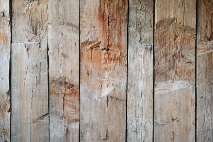 Plantar madera para evitar talar árboles: un laboratorio del MIT consigue producirla sin tierra ni luz solar