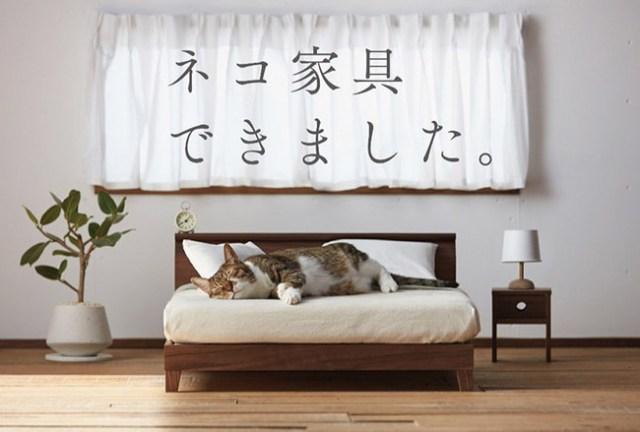 Buena Gato