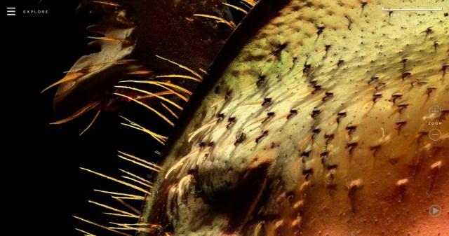 Microsculpture Levon Biss 05b