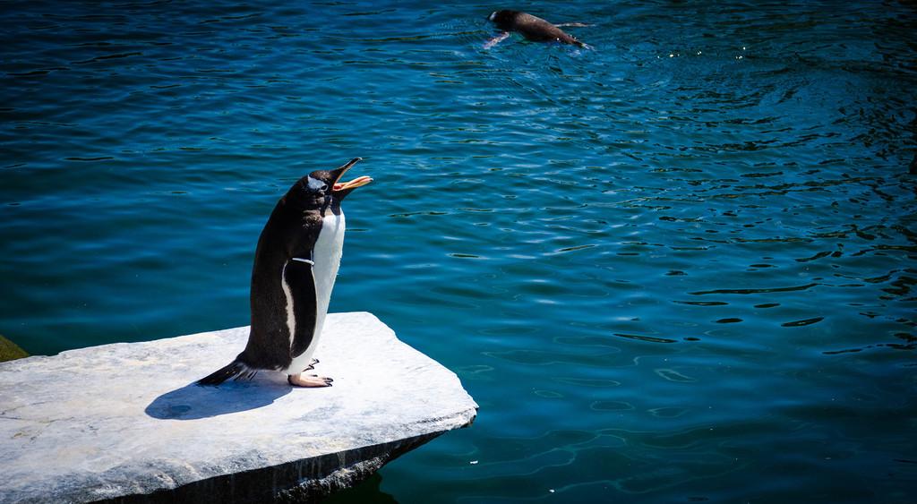 Por qué recomendar que te pases a Linux® en 2018 es distinto que en todas las situaciones anteriores