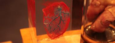 La gran aventura científica de crear un corazón bioartificial humano