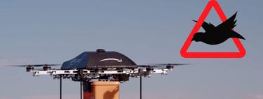 Los enormes rivales de los drones repartidores de Amazon® son... ¿Los pájaros?