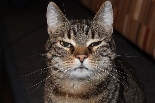 Gato con los ojos entornados.