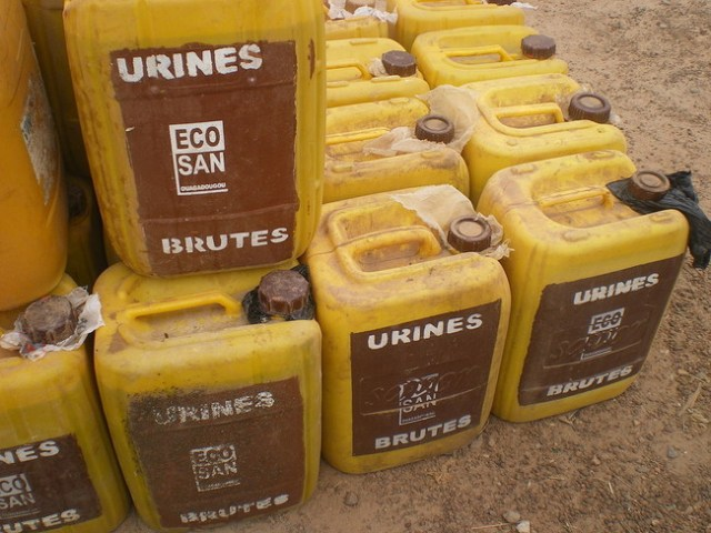 Yellow Cans With Fresh Urine Bidons Jaune Avec De L Urine Fraiche 3267054162