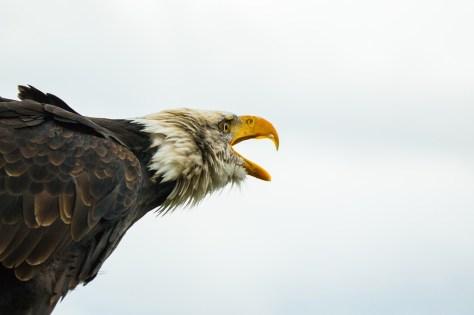 Aguila 02