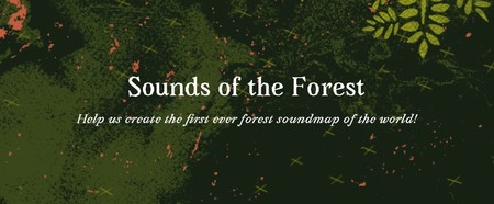 Window Y Sounds Of The Forest Submissions Timber Festival 2 3 4 July 2021