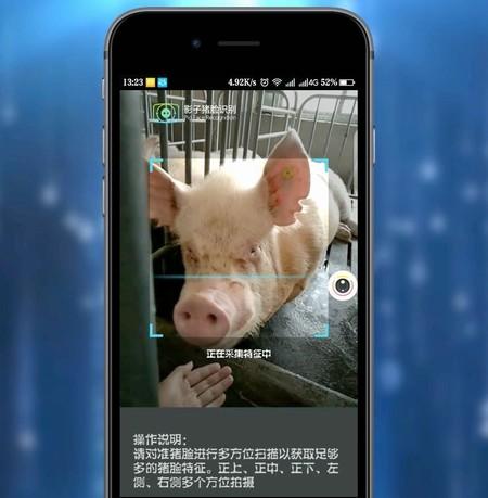China Cerdos Reconocimiento Facial 3