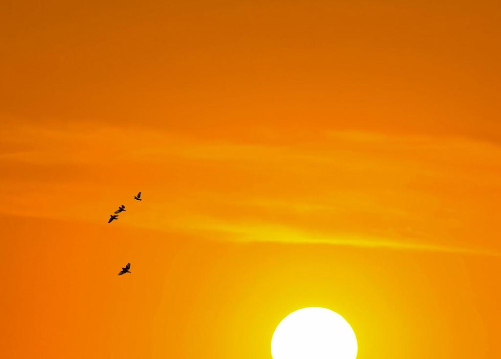 Permalink to Así quedan los movimientos migratorios de 150 especies de aves durante un año en un mapa animado de la Tierra