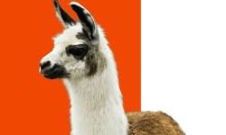 Winamp 5.8 ha sido liberado de forma oficial