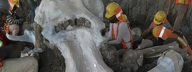 Ya van 200 esqueletos de mamuts encontrados en Santa Lucía: el nuevo aeropuerto es una auténtica central de restos fósiles
