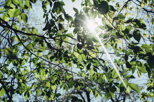Reflejos Solares Como Evitarlos O Sacarles Partido 09
