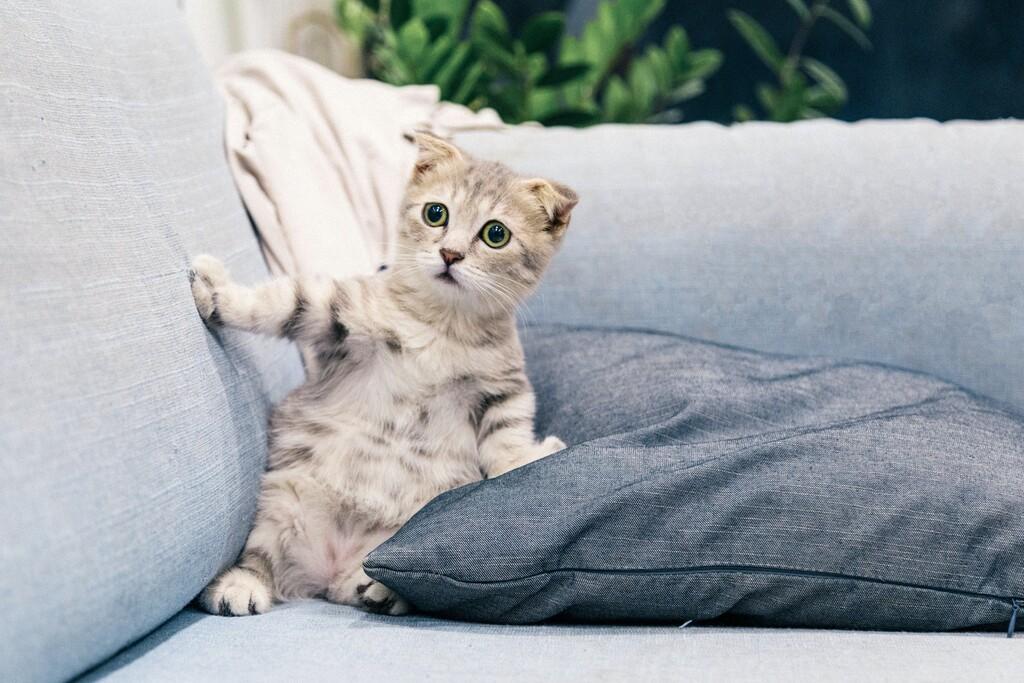 Un desarrollador de Alexa quiere que entiendas a tu gato la app Meow Talk te interpreta los maullidos de tu mascota