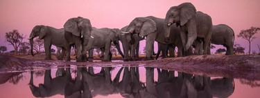 Frans Lanting, el fotógrafo naturalista que se adelantó en la necesidad de reivindicar la conservación de nuestro planeta