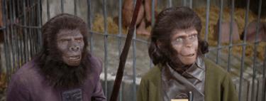 ¿Qué significa que los chimpancés tengan 'teoría de la mente'?