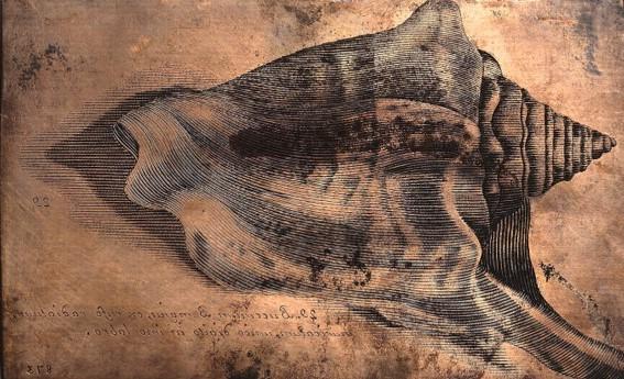 Las 2 primeras mujeres que dibujaron lo que veían por el microscopio revolucionaron la ilustración científica para siempre