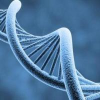 ¿Qué pasa cuando se daña tu ADN?