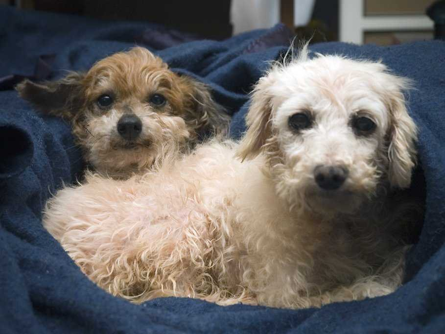 The Dog Breeds That Live The Longest Wwwbullfaxcom