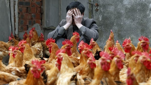 The H5N1 bird flu virus has killed 384 people worldwide since 2003.