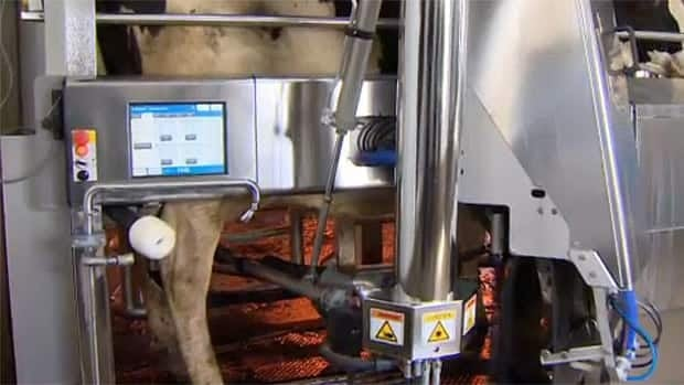 Robots horn in on farms