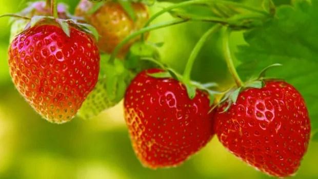 Strawberries Jpg