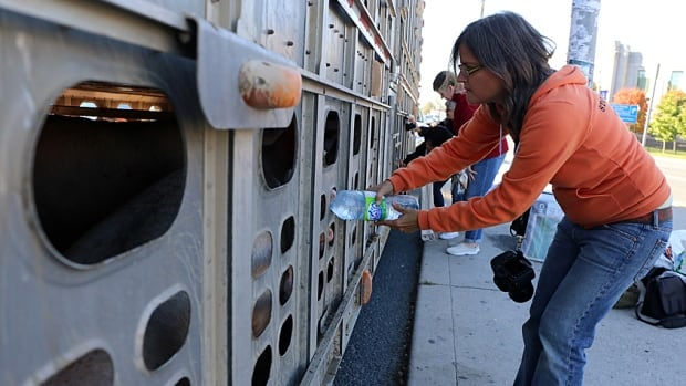 Anita Krajnc gives pigs water near a slaughterhouse in Burlington. Krajnc now faces a criminal mischief charge from the activity.
