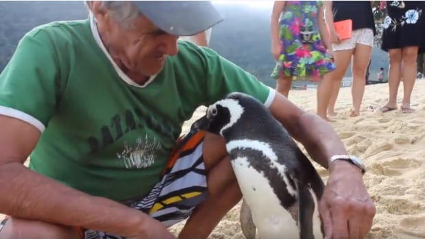 Joao Pereira de Souza rescued this penguin, which he calls Dindim, from the beach near his house, starting a long-running friendship.