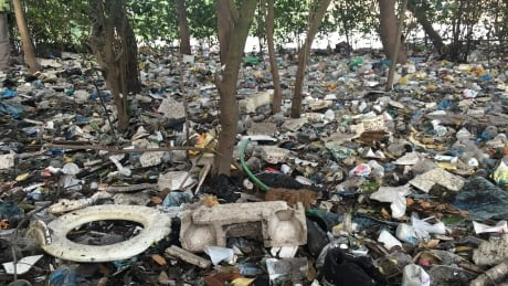 Garbage trapped in mangroves near Rio channel
