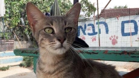 jerusalem-stray-cats-close-up