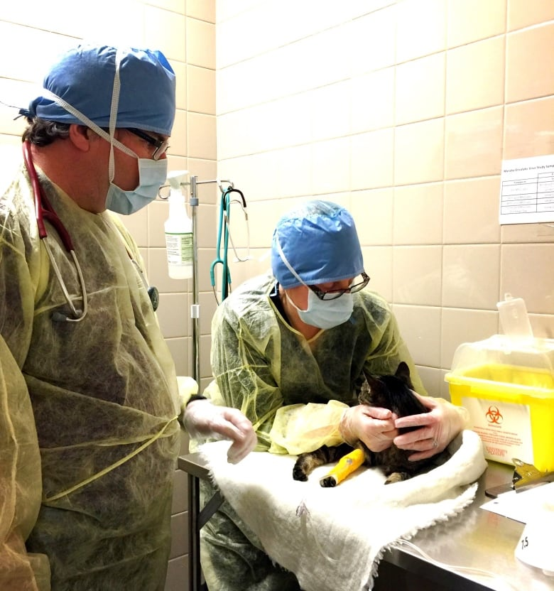 technicians at the ontario veterinary college