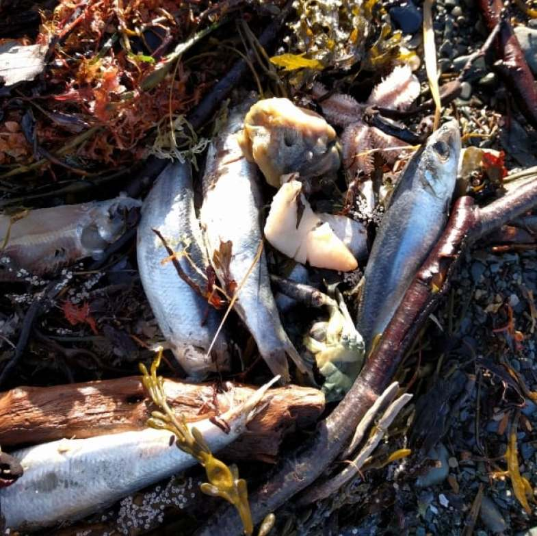 Savary Park dead fish