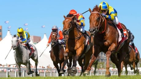 2020 King George VI Chase: Horse Racing on CBC