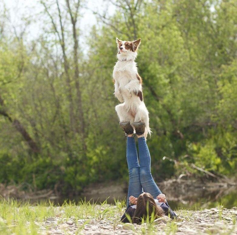 alexandra cote america s got talent dog trainer
