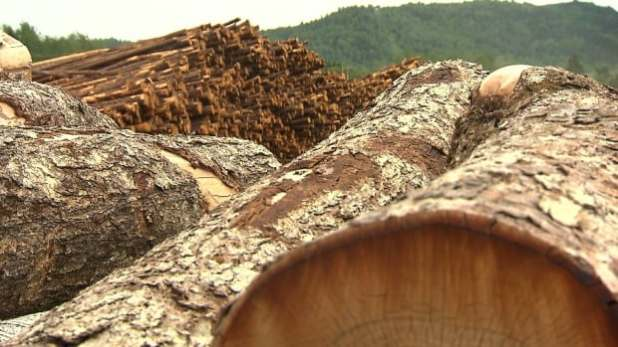 Quebec's relationship with forestry industry under scrutiny as pressure mounts to protect woodlands