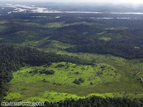 art.rainforest.afp.gi.jpg