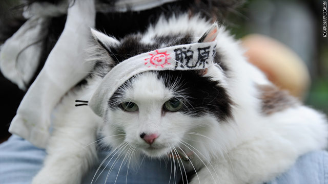 A man holds his cat clad in a headband with anti-nuclear slogans in Tokyo on June 11, 2011.