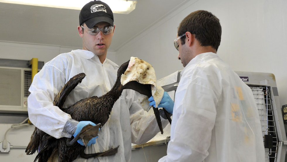 E. M. Pio Roda / CNN  Jaden Kifer, left, and Ricardo Fernandez prepare to treat a brown pelican on Saturday at the Grand Isle Wildlife Triage Center in Grand Isle, Louisiana. - CNN