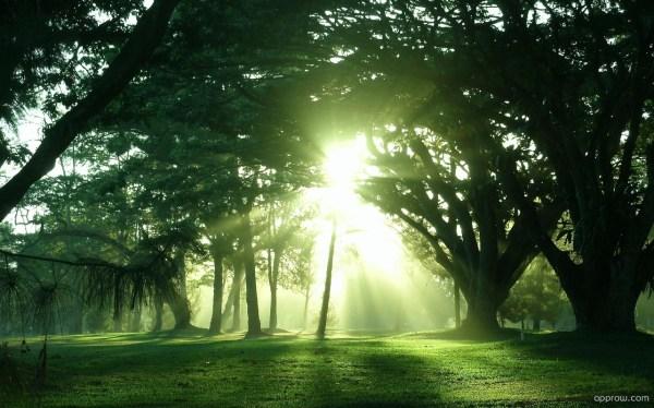 Sun Shining Through The Trees Wallpaper download - Tree HD ...