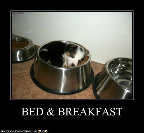 I Has A Hotdog: Sumtimez We Get Sleepy After Noms...