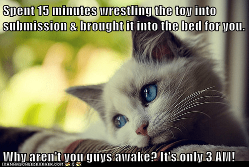 Animal Memes: First World Cat Problems - The Sun's Not Even Out Yet