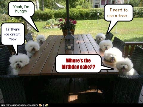 I Has A Hotdog Birthday Party Funny Dog Pictures Dog Memes Puppy Pictures Pictures Of