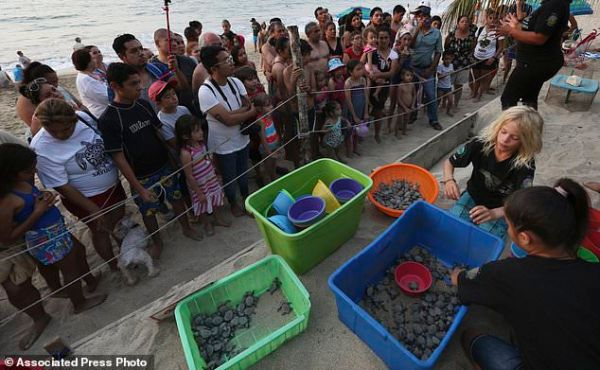 Activists in Mexico protect, release sea turtle hatchlings ...